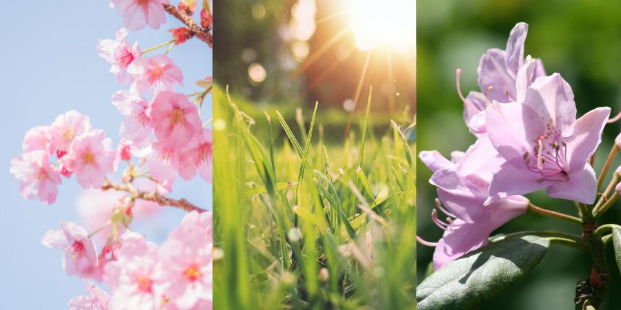 Japanese garden flowers for spring