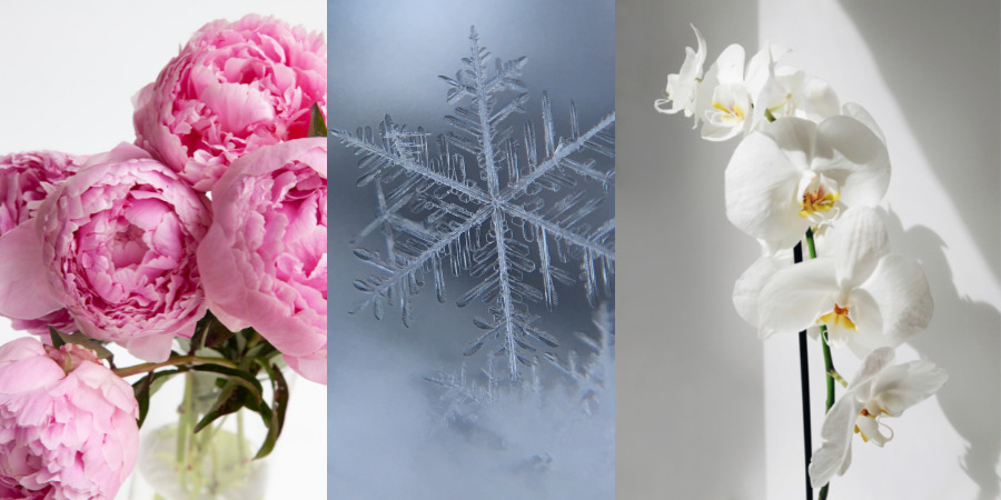 Japanese garden flowers for winter